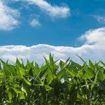 Licitación encuesta sobre la calidad de las cosechas para Ministerio