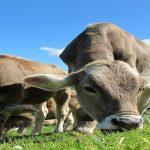 Licitación suministro de quesos con destino a los establecimientos de Paradores