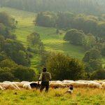 Licitación formación continua en el medio rural en Extremadura
