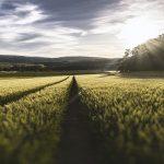 Licitación País Vasco emprendedores sector agrario