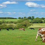 Licitación suministro de productos lácteos para Gestión Integrada de Santiago de Compostela