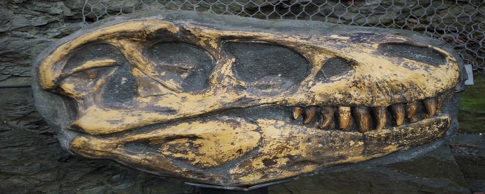 Adjudicación Cataluña intervenciones arqueológicas y paleontológicas