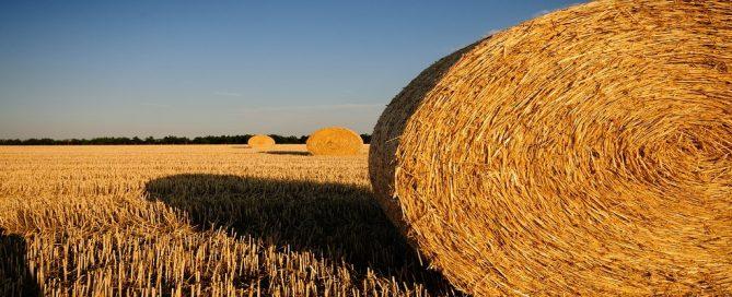 Ayudas Extremadura para mejora y modernización explotaciones agrarias