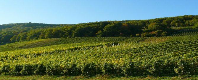 Adjudicación suministro de vinos para Paradores