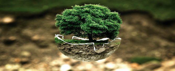 Adjudicación servicios LABS TEMÁTICOS para Fundación Biodiversidad