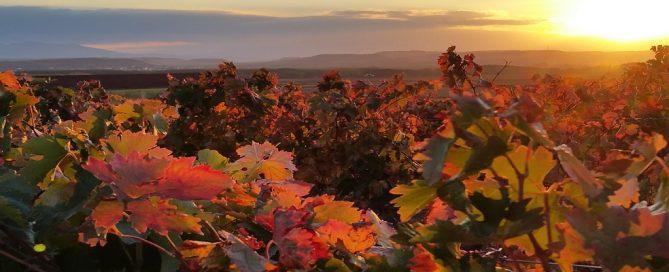 Licitación campaña de promoción del vino Rosado de Navarra en el mercado interior de la UE