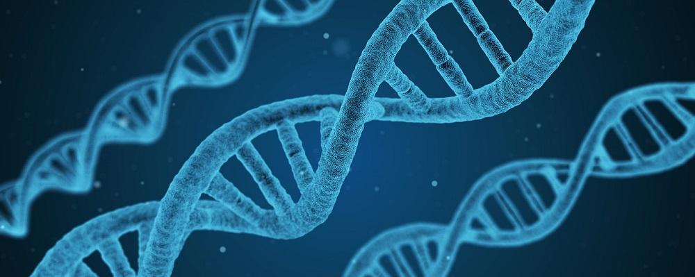Adjudicación reactivos para estudio de mutaciones del gen CFTR, Castilla y León