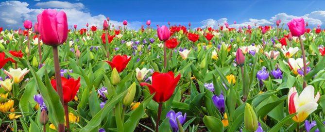 Licitación suministro de adornos florales para Diputación Provincial de Castellón
