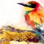 Licitación servicio web de turismo ornitológico y naturaleza de Candeleda, Ávila