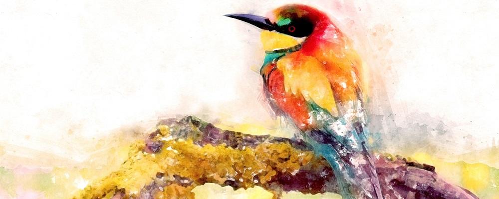 Licitación promoción XV Feria Internacional de Turismo Ornitológico 2020 en Extremadura