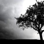 Licitación realización de 36 vídeos para la página web de los espacios naturales de Navarra
