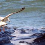 Licitación suministro pescado y marisco fresco para centros del Bienestar Social en Guadalajara