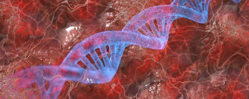 Licitación reactivos para laboratorio de Genética del Hospital Miguel Servet de Zaragoza