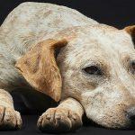 Licitación mantenimiento y actualización censo canino del Ayto. Mislata, Valencia