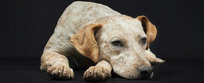 Licitación realización censo canino para Ayto. Quart de Poblet, Valencia