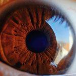 Licitación realización pruebas diagnósticas, reconocimientos y oftalmología para INSS Alicante