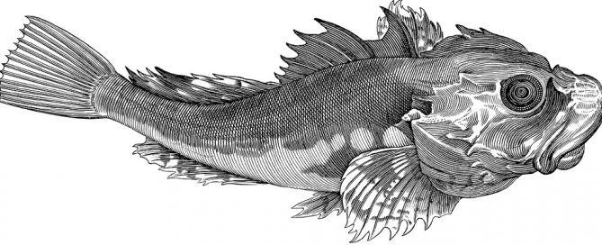 Adjudicación análisis genético de peces e invertebrados de Andalucía