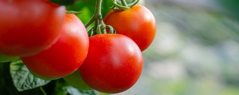 Licitación productos alimentarios para entidades sociales de las Illes Balears
