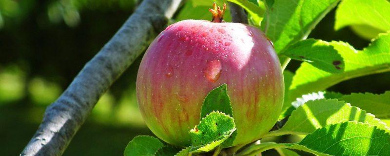 Licitación suministro de fruta a centros escolares de Aragón