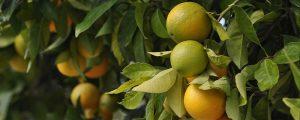 Licitación frutas, verduras y hortalizas para las escuelas del IMEB, Mallorca
